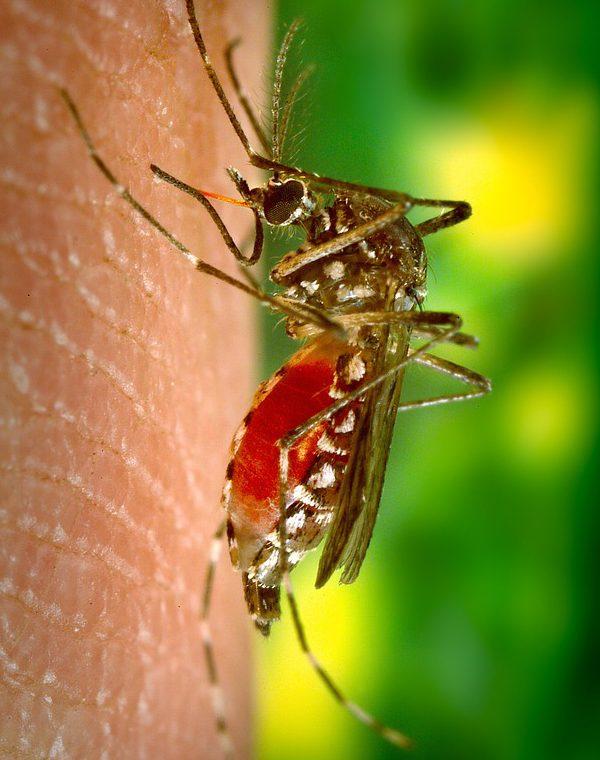 Huiles essentielles les 3 moustiquaires